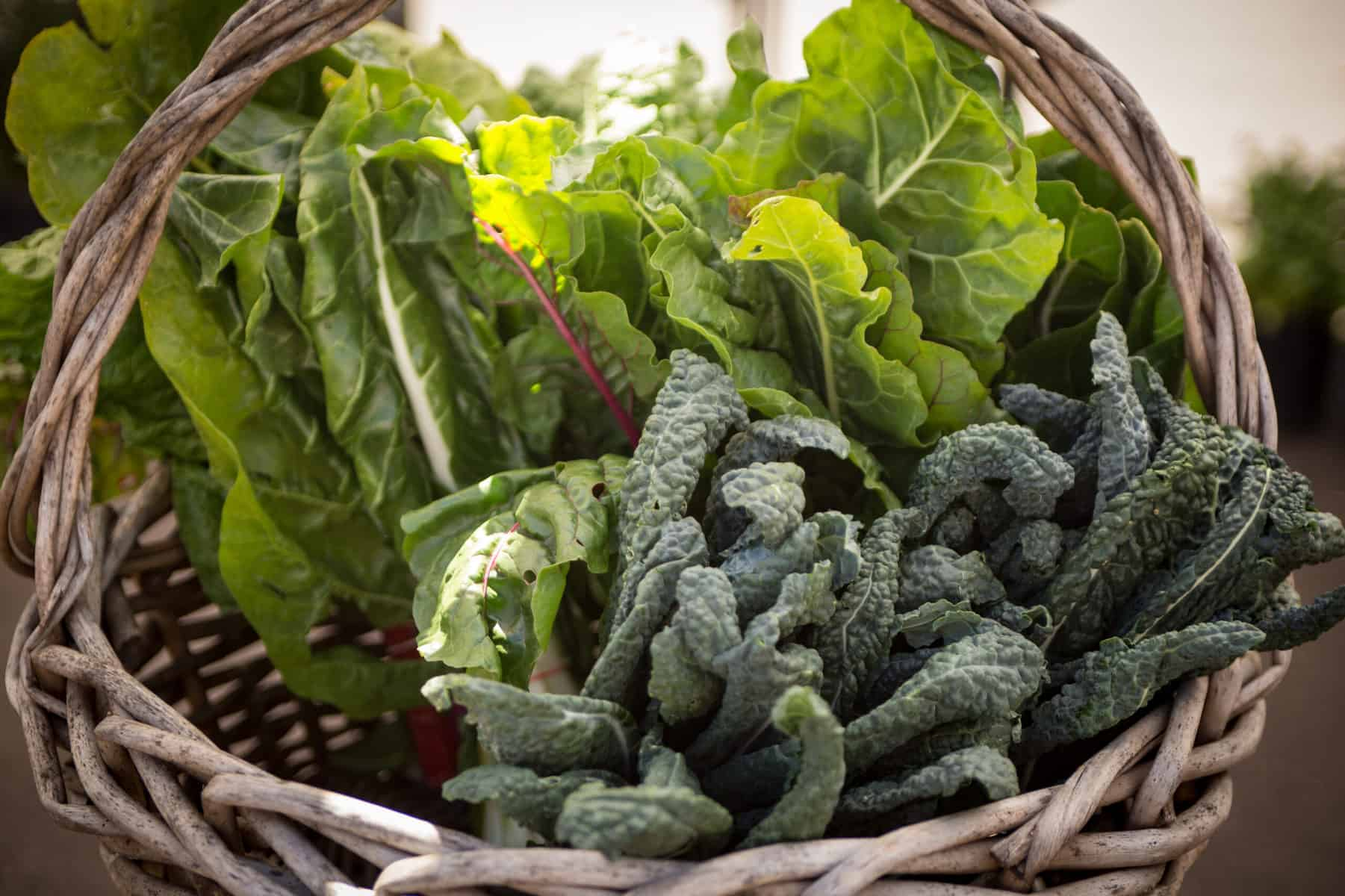 Think Leafy Greens for Spring!